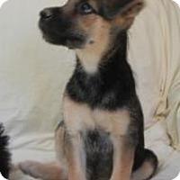 Adopt A Pet :: Enya - Antioch, IL