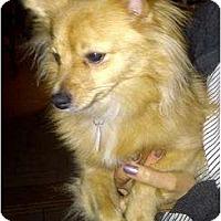 Adopt A Pet :: Roxy - Rigaud, QC