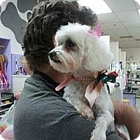 Adopt A Pet :: GiGi - Encinitas, CA
