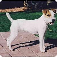 Adopt A Pet :: O'HARA - Scottsdale, AZ