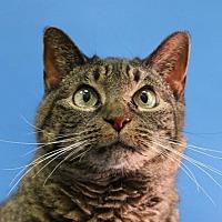 Adopt A Pet :: Laverne - Overland Park, KS