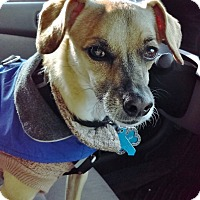 Adopt A Pet :: Jeremiah - I'm an easy dog! - Los Angeles, CA