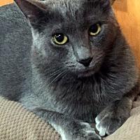 Adopt A Pet :: Jade - Staten Island, NY