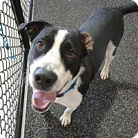 Adopt A Pet :: Jax - Meridian, ID