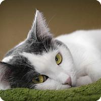 Adopt A Pet :: Moo - Bonsall, CA