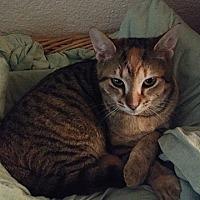 Adopt A Pet :: Emily Bronte - Tampa, FL