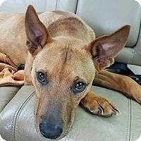 Adopt A Pet :: Benes - Athens, GA