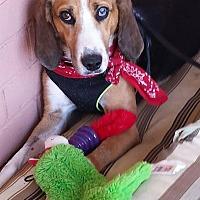 Adopt A Pet :: Lulu - Media, PA