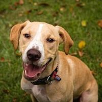 Adopt A Pet :: Calvin - Murfreesboro, NC