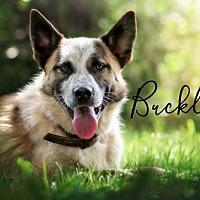 Adopt A Pet :: Buckley - Joliet, IL