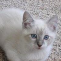 Adopt A Pet :: Doc Emmett - Fort Collins, CO