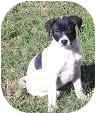 Pointer Mix Puppy for adoption in Bunnell, Florida - Addie