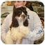 Photo 1 - Cocker Spaniel Puppy for adoption in Lonedell, Missouri - Shiloh