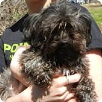 Adopt A Pet :: Bear ADOPTED!! - Antioch, IL
