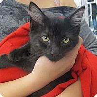 Adopt A Pet :: Nera - Riverhead, NY