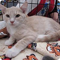 Adopt A Pet :: Banks - Vero Beach, FL