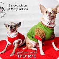Adopt A Pet :: Missy Jackson - Shawnee Mission, KS