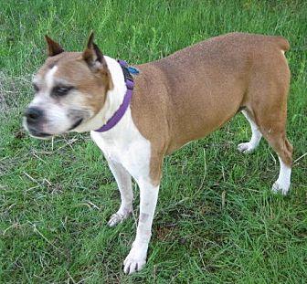 Boxer Mix Dog for adoption in Huntsville, Alabama - Laila
