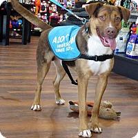 Adopt A Pet :: Clutch - Van Wert, OH