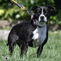 Adopt A Pet :: Sammie(Jackie) - Ottumwa, IA