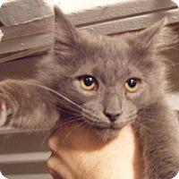 Adopt A Pet :: Fluffy - Kensington, MD