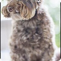 Adopt A Pet :: Gus-adoption pending - Mississauga, ON