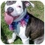 Photo 1 - Pit Bull Terrier Dog for adoption in Huntington, New York - Blossom