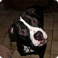Adopt A Pet :: Linus - Lake Worth, FL