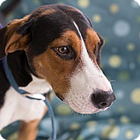 Adopt A Pet :: Jackson-URGENT - Providence, RI