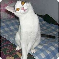 Adopt A Pet :: Tinker - Odenton, MD