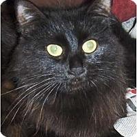 Adopt A Pet :: Nina - Chandler, AZ