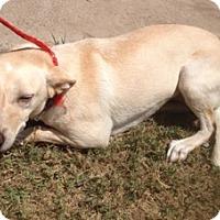 Adopt A Pet :: Paulina - McAllen, TX