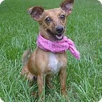 Adopt A Pet :: Sadie - Mocksville, NC