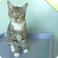 Adopt A Pet :: Josephine (