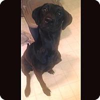 Adopt A Pet :: Leelu - Lewisville, IN