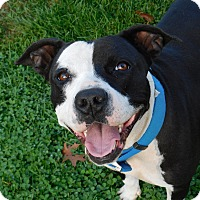 Adopt A Pet :: patiences - Mooresville, IN