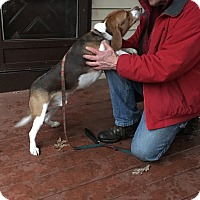 Adopt A Pet :: FRITZ-Courtesy Posting - Ventnor City, NJ