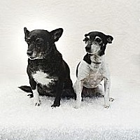 Adopt A Pet :: Spice & Sugar - Davie, FL