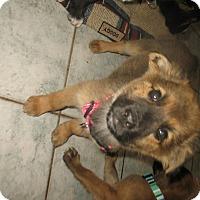 Adopt A Pet :: Lily - Egremont, AB