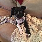 Adopt A Pet :: Finn (RBF)