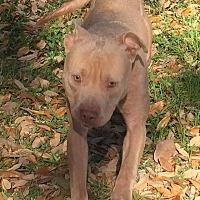 Adopt A Pet :: Chloe - Valley Stream, NY