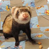 Adopt A Pet :: Emma - Carlton, OR