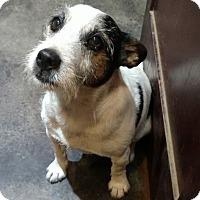 Adopt A Pet :: Clifford in Owasso, OK - Oklahoma City, OK