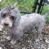 Adopt A Pet :: Justin - Oak Ridge, NJ