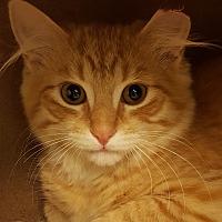 Adopt A Pet :: Smithers - Grayslake, IL