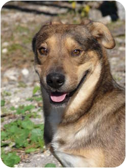Catahoula Leopard Dog/Shar Pei Mix Dog for adoption in Kirby, Texas - Binx