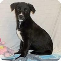 Adopt A Pet :: Nora - South Jersey, NJ