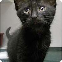 Adopt A Pet :: Tula - Maywood, NJ