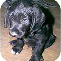 Adopt A Pet :: Bernardo - dewey, AZ