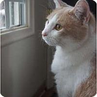 Adopt A Pet :: Sunshine - Xenia, OH